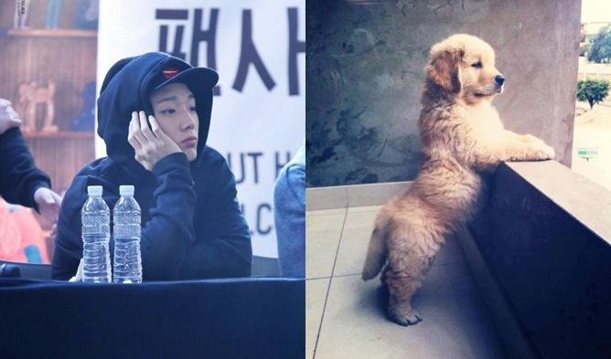 kpop puppies, kpop puppy faces, kpop idols, kpop idols who look like puppies, kpop idol puppies, kpop idol puppy faces, kpop idols look like puppies, onew puppy, baro puppy, baekhyun puppy, bobby puppy, cha eunwoo puppy, yonghoon puppy, hyuk puppy