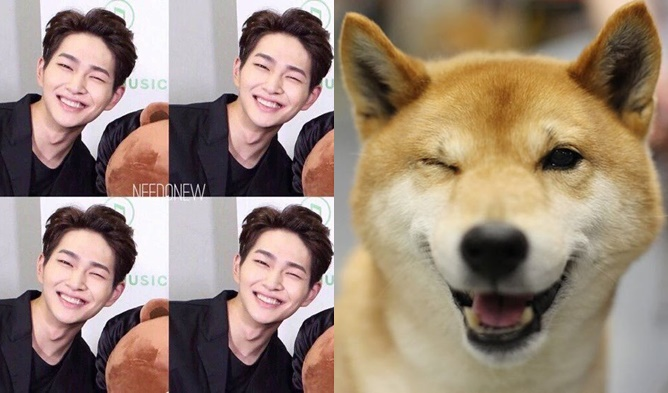 Kpop Puppies Puppy Faces Idols Who Look Like