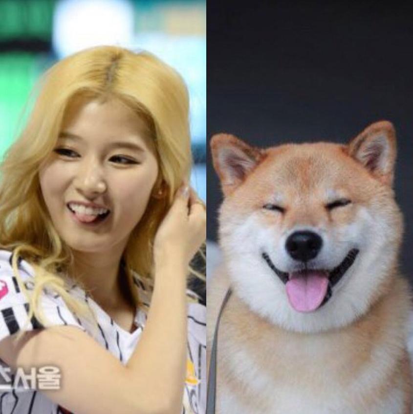 twice sana, sana, twice, shiba, twice sana shiba, shiba dog, kpop idols animals, kpop idols pet, shiba puppy