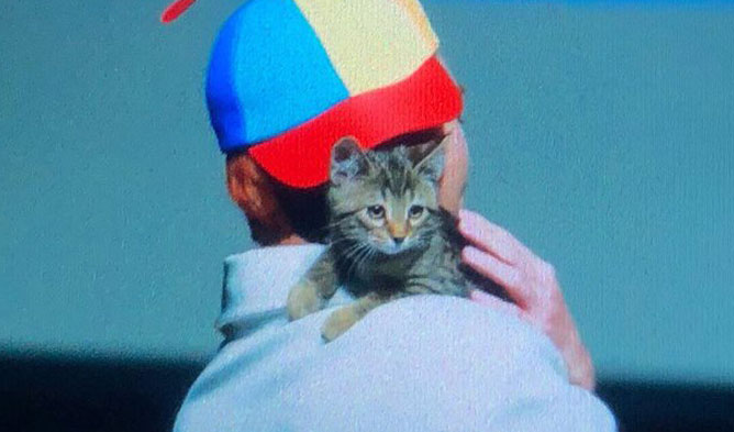 monsta x cat, monsta x jooheon cat, Gucci Yoshi monsta x, Gucci Yoshi cat, kitten, idol pet,