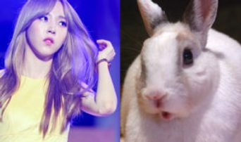 6 Famous K-Pop Idols Who Totally Look Like Rodent Animals