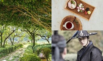 Discover Korea: Experience Korean Tasty and Healthy Green Tea By Visiting and Tasting