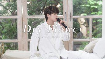 Kim KookHeon(B.O.Y) - 'Dry Flower' Official Live Clip
