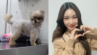 ChungHa Shares The Story Behind The Dog, Aran, Which She Is Taking Care Of