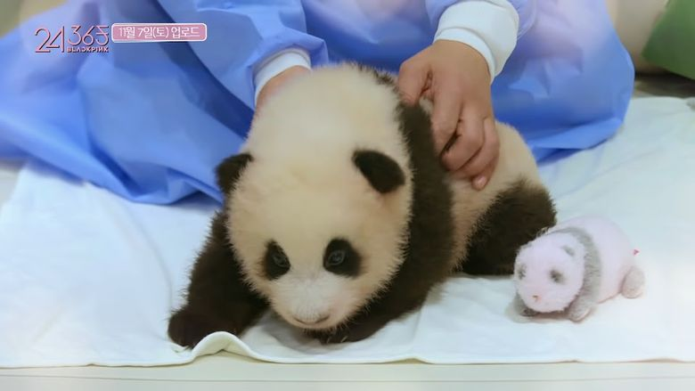 China Wants BLACKPINK Apology For Panda? BLINK Wants China To Apologize For COVID-19